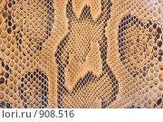 Купить «Текстура кожи питона», фото № 908516, снято 11 мая 2009 г. (c) Антон Стариков / Фотобанк Лори