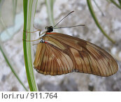 Бабочка. Стоковое фото, фотограф Екатерина Исаева / Фотобанк Лори
