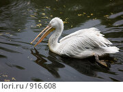 Купить «Пеликан», фото № 916608, снято 12 мая 2009 г. (c) Argument / Фотобанк Лори