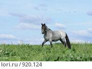 Купить «Лошадь в поле», фото № 920124, снято 14 июня 2009 г. (c) Яна Королёва / Фотобанк Лори