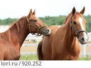 Купить «Лошади», фото № 920252, снято 14 июня 2009 г. (c) Яна Королёва / Фотобанк Лори