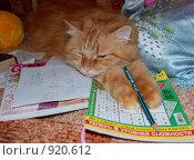 Купить «Рыжий кот учит уроки», фото № 920612, снято 21 января 2009 г. (c) Юлия Калошина / Фотобанк Лори