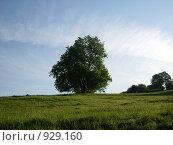 Дерево. Стоковое фото, фотограф Владимир Соловьев / Фотобанк Лори
