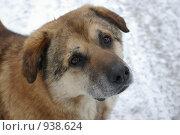 Бродячий пес. Стоковое фото, фотограф Подбивалова Юлия / Фотобанк Лори