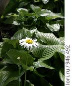 Цветок в саду. Стоковое фото, фотограф Сергей Седых / Фотобанк Лори