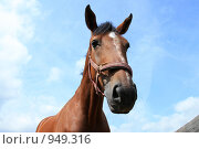 Купить «Портрет лошади», фото № 949316, снято 29 июня 2009 г. (c) Яна Королёва / Фотобанк Лори
