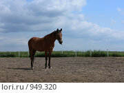 Купить «Лошадь в загоне», фото № 949320, снято 29 июня 2009 г. (c) Яна Королёва / Фотобанк Лори
