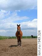 Купить «Лошадь в загоне», фото № 949324, снято 29 июня 2009 г. (c) Яна Королёва / Фотобанк Лори