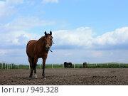 Купить «Лошадь», фото № 949328, снято 29 июня 2009 г. (c) Яна Королёва / Фотобанк Лори