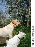 Купить «Домашние животные за здоровое питание!», фото № 950636, снято 10 мая 2007 г. (c) Анна Павлова / Фотобанк Лори