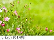 Купить «Цветы», фото № 951608, снято 28 июня 2009 г. (c) Юрий Бельмесов / Фотобанк Лори