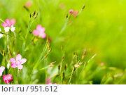 Цветы, фото № 951612, снято 28 июня 2009 г. (c) Юрий Бельмесов / Фотобанк Лори