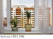 Купить «Комнатные растения в домашнем интерьере», фото № 951740, снято 28 июня 2009 г. (c) Наталья Чуб / Фотобанк Лори