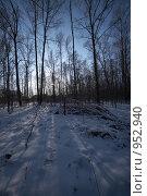 Купить «Зимний лес», фото № 952940, снято 4 января 2009 г. (c) Александр Максимов / Фотобанк Лори