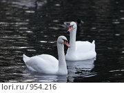 Купить «Осень, городской парк. Пара лебедей в ледяной воде», фото № 954216, снято 8 ноября 2008 г. (c) Max Toporsky / Фотобанк Лори