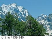 Сосны на фоне гор в дымке. Стоковое фото, фотограф Альберт Черных / Фотобанк Лори