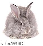 Купить «Кролик», фото № 961880, снято 27 мая 2009 г. (c) Насыров Руслан / Фотобанк Лори