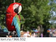 Купить «Ара», фото № 966932, снято 17 июня 2009 г. (c) Игорь Долгов / Фотобанк Лори
