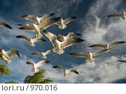 Купить «Парящие чайки», фото № 970016, снято 31 декабря 2008 г. (c) Ирина Кожемякина / Фотобанк Лори