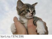 Купить «Котёнок», фото № 974596, снято 8 июля 2009 г. (c) Анна Лукина / Фотобанк Лори