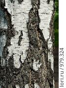 Кора березы. Стоковое фото, фотограф Алексей Васильев / Фотобанк Лори