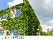 Здание с вертикальным озеленением. Стоковое фото, фотограф Сергей Шульгин / Фотобанк Лори