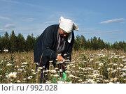 Купить «Бабушка собирает ромашки», фото № 992028, снято 18 июля 2009 г. (c) Алексей Рогожа / Фотобанк Лори
