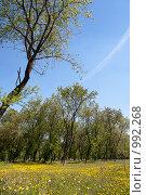 Купить «Весенний пейзаж», фото № 992268, снято 6 июня 2009 г. (c) Юрий Бельмесов / Фотобанк Лори