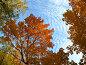 Осеннее деревья под голубым небом, фото № 995460, снято 1 октября 2008 г. (c) Михаил Коханчиков / Фотобанк Лори