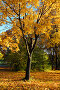 Осеннее дерево, фото № 995488, снято 2 октября 2008 г. (c) Михаил Коханчиков / Фотобанк Лори