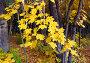 Осенние листья, фото № 995492, снято 2 октября 2008 г. (c) Михаил Коханчиков / Фотобанк Лори