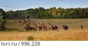 Купить «Табун», фото № 996228, снято 30 июня 2009 г. (c) Вадим Морозов / Фотобанк Лори