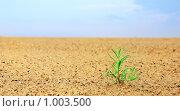 Купить «Росток в пустыне», фото № 1003500, снято 20 июля 2009 г. (c) Анфимов Леонид / Фотобанк Лори