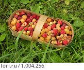 Купить «Лукошко с малиной», фото № 1004256, снято 26 июля 2009 г. (c) Neta / Фотобанк Лори