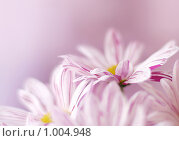 Купить «Розовые лепестки», фото № 1004948, снято 9 марта 2006 г. (c) Алена Роот / Фотобанк Лори
