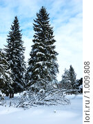 Купить «Зимний еловый лес», фото № 1009808, снято 17 февраля 2007 г. (c) Виктор Сагайдашин / Фотобанк Лори