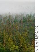 Туманный лес. Стоковое фото, фотограф Кекяляйнен Андрей / Фотобанк Лори