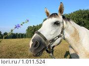 Купить «Лошадь крупным планом», фото № 1011524, снято 1 августа 2009 г. (c) Яна Королёва / Фотобанк Лори