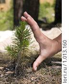 Купить «Ладонь и маленькая ель», фото № 1013160, снято 17 июля 2008 г. (c) Максим Мартыненко / Фотобанк Лори