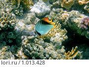 Купить «Рыбка», фото № 1013428, снято 28 июля 2009 г. (c) rommor / Фотобанк Лори