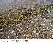 Купить «Песок и галька», фото № 1017320, снято 1 августа 2009 г. (c) Дубинин Дмитрий / Фотобанк Лори