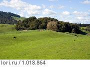 Купить «Зеленый холмистый пейзаж», фото № 1018864, снято 20 сентября 2008 г. (c) NataMint / Фотобанк Лори