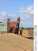 Сушка зерна на зернотоке (2009 год). Редакционное фото, фотограф Гульнара Магданова / Фотобанк Лори