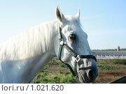 Купить «Белый конь», фото № 1021620, снято 6 августа 2009 г. (c) Яна Королёва / Фотобанк Лори