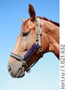 Купить «Портрет коня», фото № 1021632, снято 6 августа 2009 г. (c) Яна Королёва / Фотобанк Лори