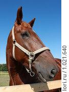 Купить «Портрет коня», фото № 1021640, снято 6 августа 2009 г. (c) Яна Королёва / Фотобанк Лори