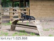 Купить «Черная коза в мини-зоопарке на Елагином острове. Санкт-Петербург», эксклюзивное фото № 1025868, снято 16 июля 2009 г. (c) Румянцева Наталия / Фотобанк Лори
