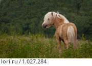 Купить «Лошадь», фото № 1027284, снято 29 июня 2009 г. (c) Вадим Морозов / Фотобанк Лори