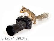 Бельчонок-фотограф. Стоковое фото, фотограф Ирина Кожемякина / Фотобанк Лори