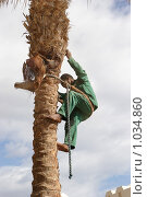 Купить «Уход за пальмами», фото № 1034860, снято 1 марта 2009 г. (c) Dmitry Nabokov / Фотобанк Лори